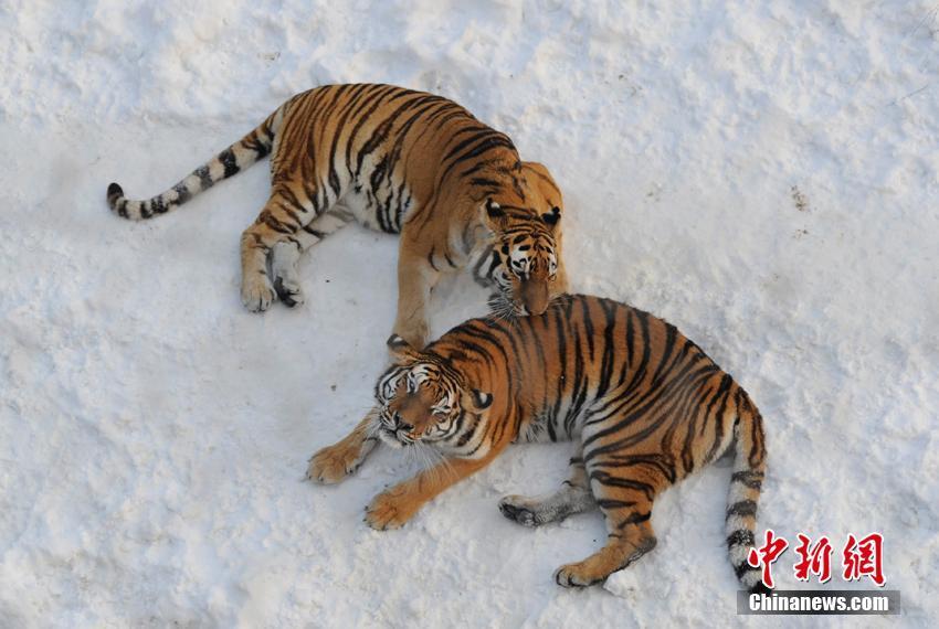 世界上最耐寒的动物_最耐寒的动物