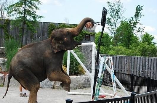 动物打篮球集锦