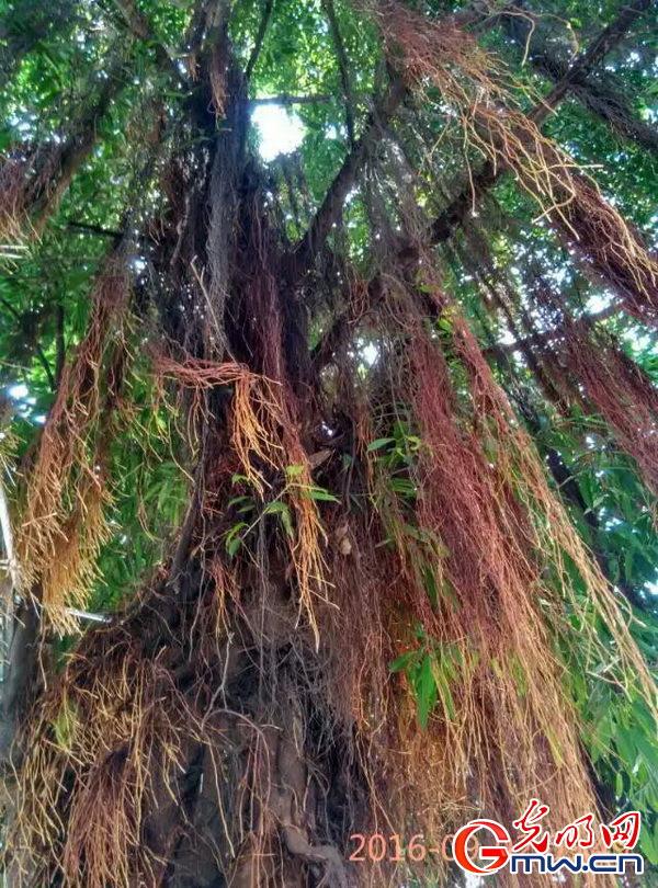 16653 树根